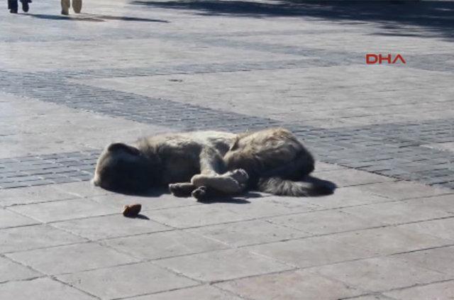 Kayseri'de 'İnsanlık ölmemiş' dedirten 3'lü