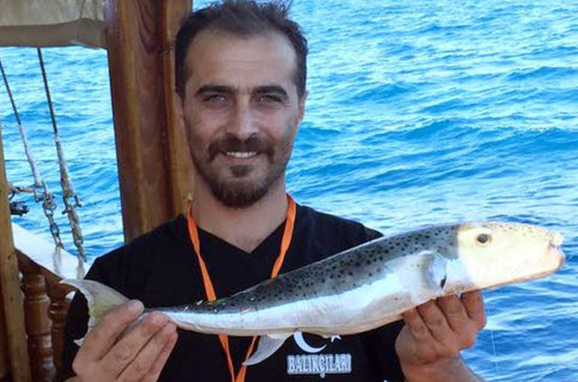 Akdeniz'de balon balığı kabusu, Mersin'de balon balığı yakalandı
