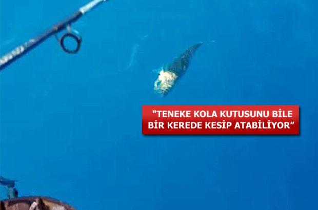 Balıkçıların kabusu oldu!