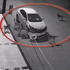 Sakarya'dan sonra Muğla'da da köpekler araca saldırdı iddiası