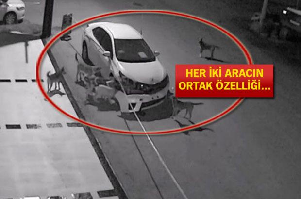 Sakarya'dan sonra bu kez Muğla'da 'sokak köpekleri araca saldırdı' iddiası!