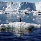 Antarktika'da dünyanın en büyük koruma alanı yaratılacak