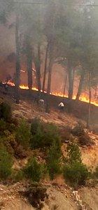 Antalya Finike'de orman yangını