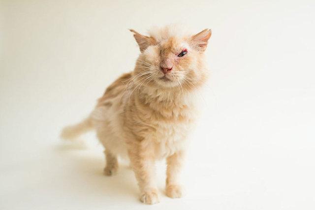 Kedinin yüzüne acımadan yüzüne asit döktüler!