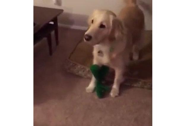 Köpeğine sürpriz yapan adam fenomen oldu!