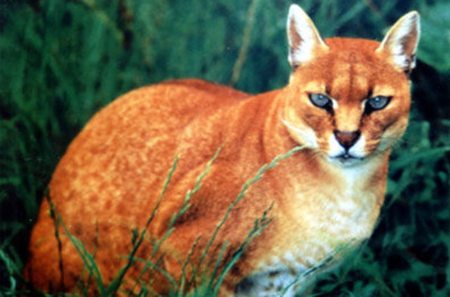 Kıvanç Tatlıtuğ'un kedisi