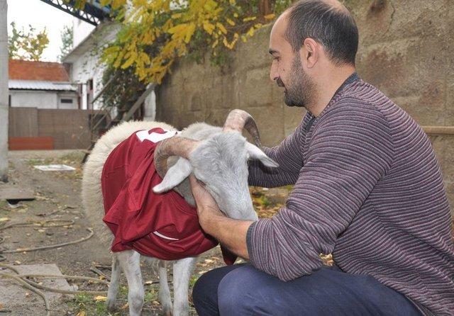 Bursa'da bir kasap, koçla arkadaş oldu