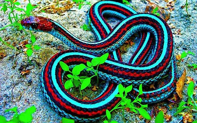 Isırdığını anında felç eden yılan!