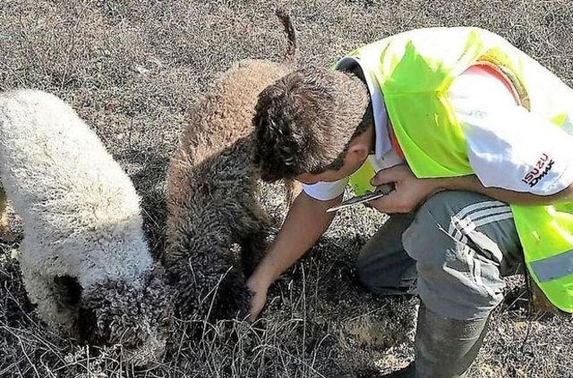 Zonguldak'ta köpekler keşfetti!