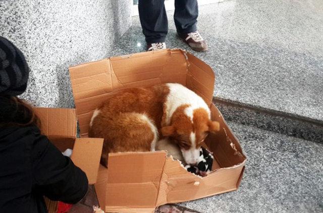 Esnafın dikkati köpeklerin hayatını kurtardı