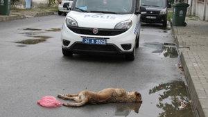 Sokak köpeklerini katlettiler!