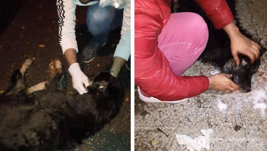Sapanca Belediyesi köpek zehirlenmesi zabıta
