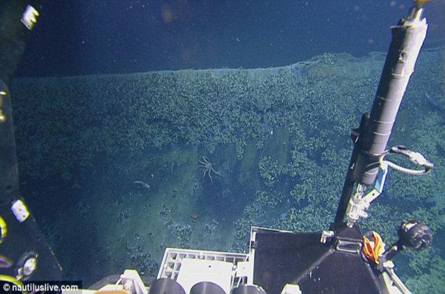 """Meksika Körfezi'nin derinliklerindeki """"ölüm jakuzisi"""""""