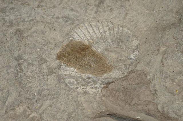 Bitlis'te 180 milyon yıllık gerçek ortaya çıktı