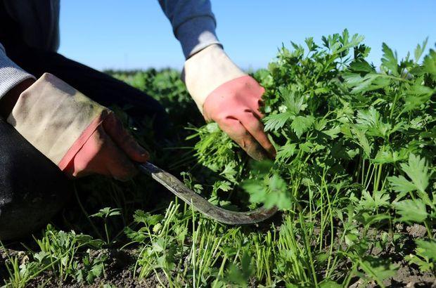 tarımsal ürün