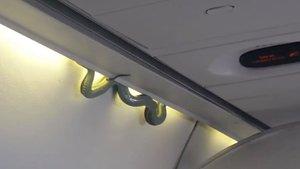 Meksika uçağında yılan korkusu