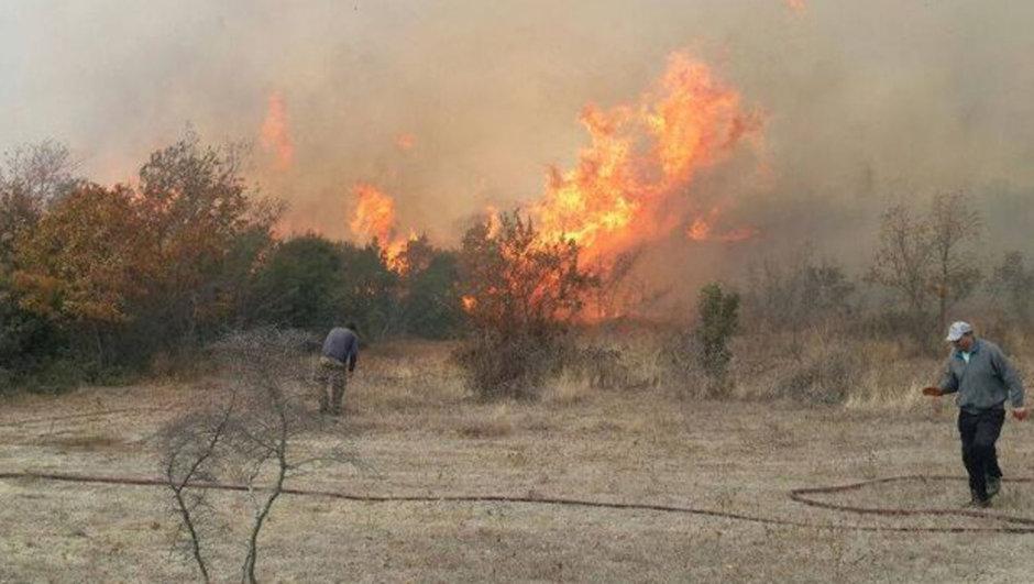Edirne Orman yangını
