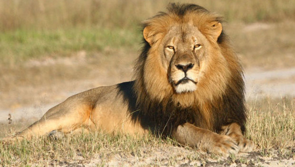 aslan cecil