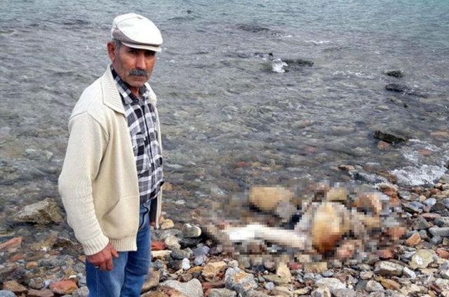 Bodrum'da erkek cesedi bulundu