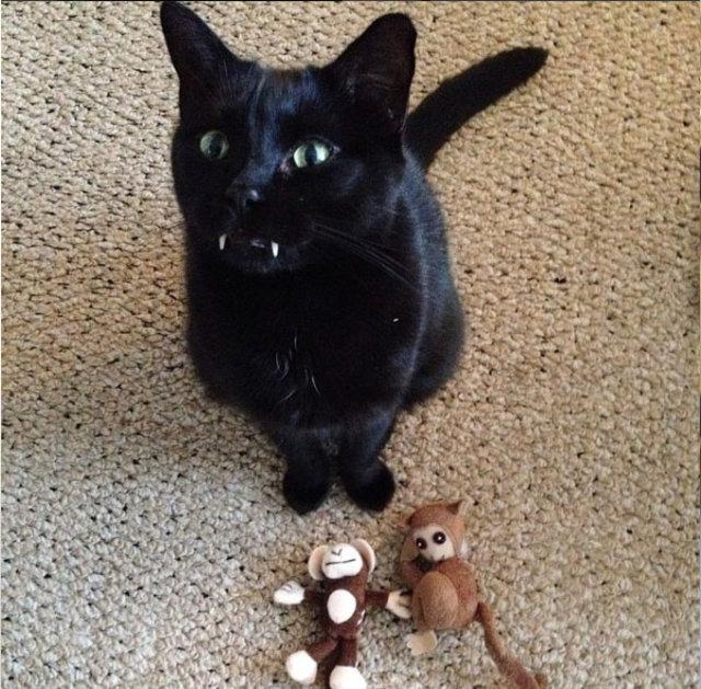 Kedi sandı, dünyanın en tatlı vampiri çıktı!