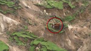 Yeni Zelanda'da deprem sonrası ilginç görüntü meydana geldi!