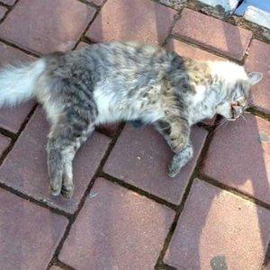 Emniyetten 'kedi katliamı' açıklaması