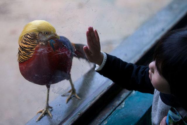 Trump'ı 'kuş'a çevirdiler!