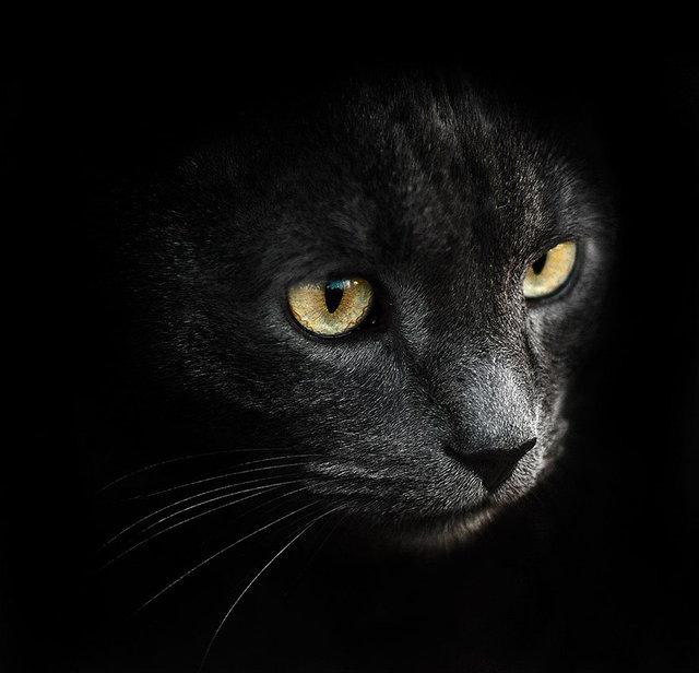 Sergey Polyushko'nun hayvan portreleri, hayvanlara aşık ediyor