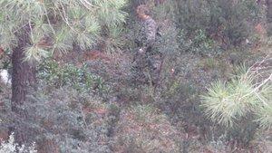 Kartal'da ormanlık alanda operasyon
