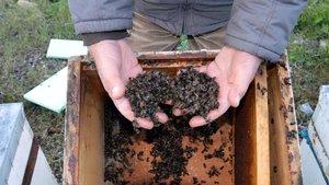 Sakarya'da 60 bin arının zehirlendiği iddia ediliyor