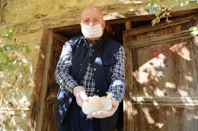 Kesilen kavaklar istiridye mantarı yetiştiriciliğinde kullanılıyor