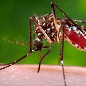 Zika virüsüyle doğan bebekler 3 yıl izlenecek