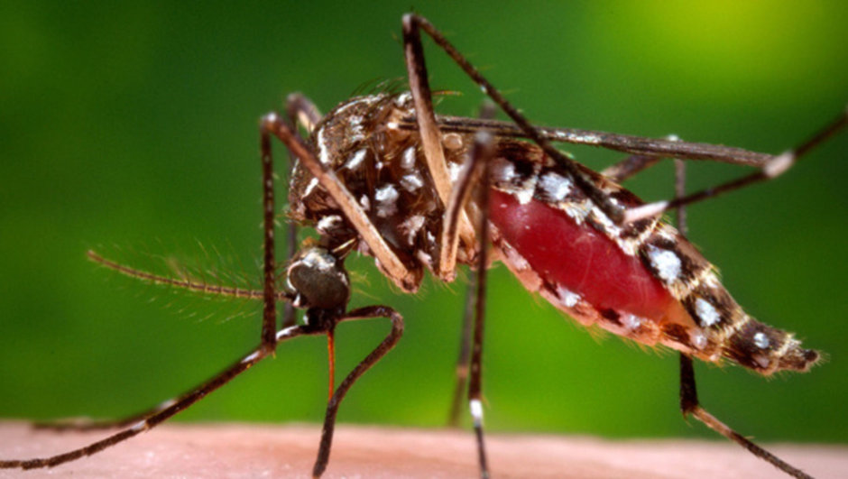 Brezilya'da Zika virüsüyle doğan bebekler 3 yıl izlenecek