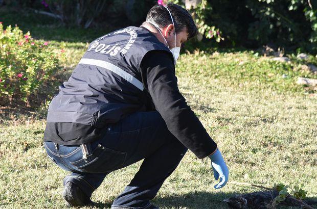 Antalya'da kedi katliamı
