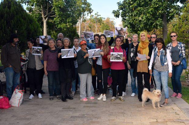Antalya'daki kedi katliamına tepkiler sürüyor