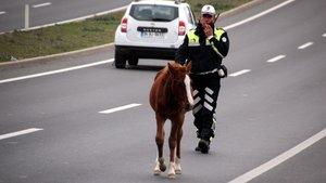 Yola çıkan atlar sürücülere zor anlar yaşattı