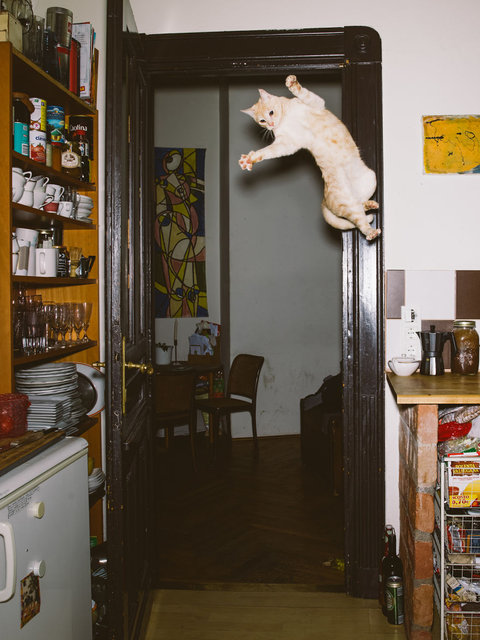 Kediyi tam o anda çekti!