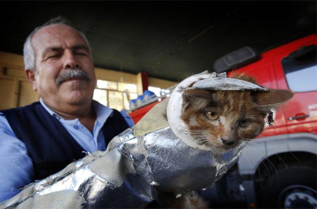 Kafasını 'wc matik'e sıkıştıran minik kedinin zor anları