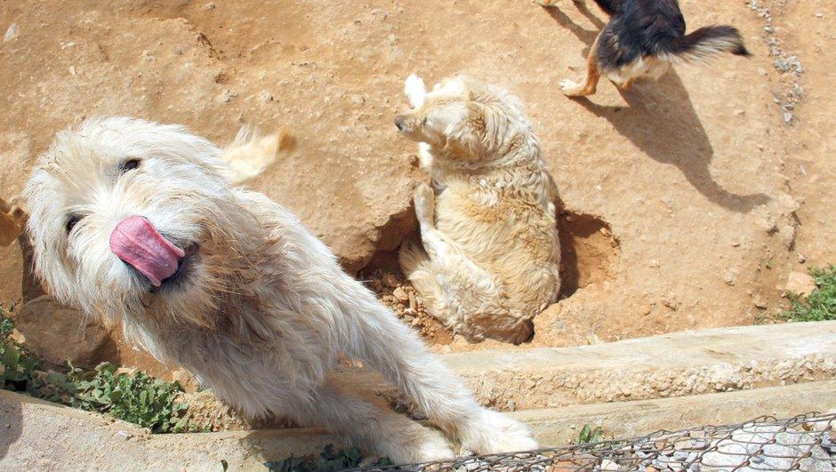 klinik Veteriner kliniği Sokak hayvanları Üsküdar belediyesi