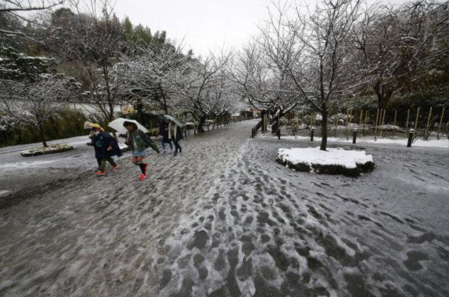 Tokyo'da 54 yıl sonra ilk kez kasım ayında kar yağdı