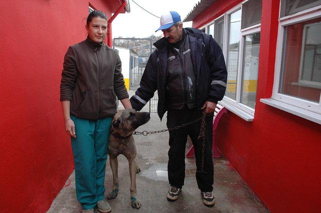 Tekirdağ'da bir aracın arkasında sürüklenen köpek barınağa teslim edildi