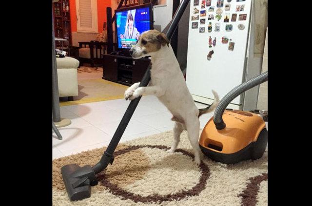 İnternet fenomeni köpek: Maylo!