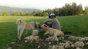 Çobanlık yapan Serdar Okuyucu Dolunay partisini kurdu