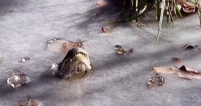 Vahşi doğanın ürküten fotoğrafları