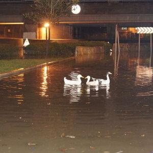 İzmir'i sel bastı, ördekler sokaklarda yüzdü