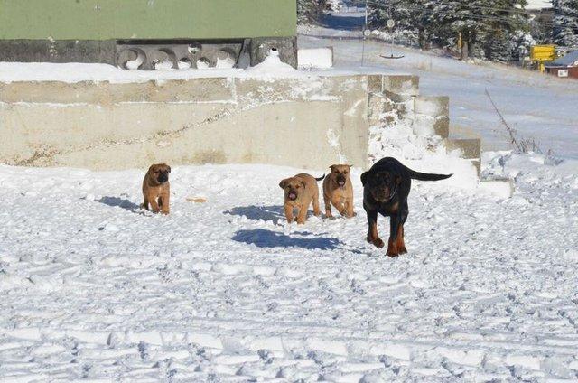 Uludağ'da hava sıcaklığı -12 dereceye düştü