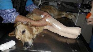 Muğla'da köpeğin ayaklarını kırıp gözünü kör ettiler