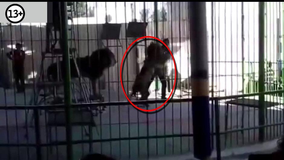 sirk aslan saldırısı