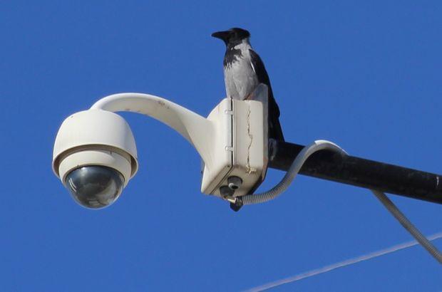 Türkiye'de yeni bir kuş türü