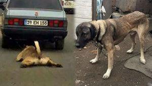 Çorlu'da metrelerce sürüklenen köpek yeni sahibine verildi